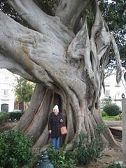 Marilyn and The Tree (Shirley Pickthorne-Elliott) Tags: park trees marilyn ficus cadiz