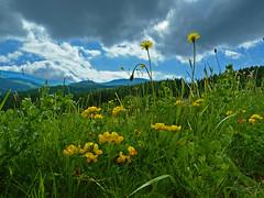 Wildflower meadow (Vestaligo) Tags: sky cloud mountain grass hill meadow wiese himmel wolken berge gras wildflower wildblumen