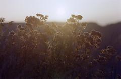 (xbacksteinx) Tags: light sunset slr film backlight analog 35mm hp october mood moody expired blackforest nikonf3 135mm c41 colornegative gaistal nikkor135mmf28ai fujicolorpress400 schweizerkopf