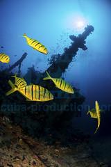 2013 11 VOISIN MALDIVES-3190
