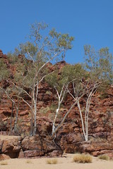 Three ghostgums, Trephina Gorge. 4 of 4 (misty1925) Tags: outback gorge northernterritory gumtrees ghostgum trephinagorge eastmacdonnellranges
