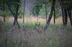 Group Portrait (michael.veltman) Tags: college illinois deer junior jjc joliet