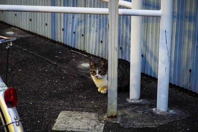 Today's Cat@2015-02-08