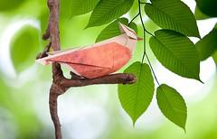Song Bird - Nguyen Hung Cuong (Rui.Roda) Tags: bird origami song pssaro papiroflexia oiseau hung nguyen pjaro cuong