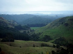View to the harbour (mikescottnz) Tags: green forestry farming nz northisland distantharbour aotearoalandofthelongwhitecloud