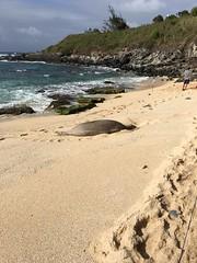 IMG_0278 (Ourisman Travel) Tags: hawaii maui wailea hotelwailea