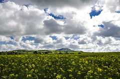 The Wrekin (bigbluewolf) Tags: blue sky cloud white yellow clouds countryside spring nikon shropshire may sigma rapeseed wrekin 18250 18250mm d7000