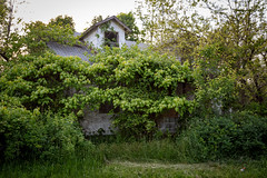 5/10/16 Little Angles (Karol A Olson) Tags: house green abandoned overgrown maryland columbia may16 project3662016