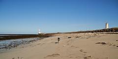 25april_gardskagaviti_001 (Stefn H. Kristinsson) Tags: dog playing beach spring sand venus april hundur clearsky strnd 2016 tamron2875 garskagaviti nikond800