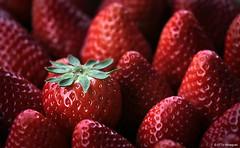 Verfhrung (otto.hitzegrad) Tags: rot still grn frucht erdbeere obst nachtisch kerne ss