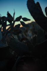 Seeing (thedarkerdark) Tags: california sunset cactus nature shadows desert joshuatree carloscastaneda journeytoixtlan