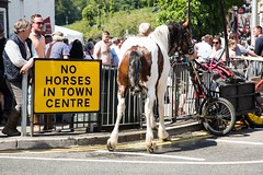That's what I think of your sign! (Oregami) Tags: applebyhorsefair streetphotography urinating sign nohorses