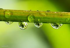 Under the rain (gabrielegalloni) Tags: verde primavera rain pioggia temporale acquazzone