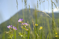 Am Tegernsee (rosenblume75) Tags: outdoor natur pflanze blume