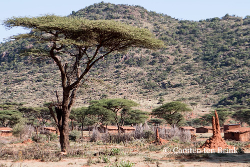 Landscape with acacias and termites
