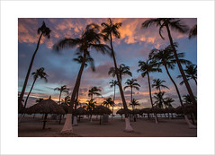 Sunset palms (andyrousephotography) Tags: longexposure trees sunset sun beach clouds canon hotel coast warm glow venezuela windy palm aruba 5d oranges reds palmbeach riupalace mkiii dutchcaribbean