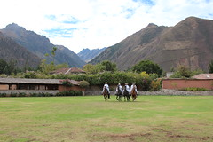 IMG_6782 (University of Pennsylvania Alumni) Tags: peru machu picchu cuzco llama