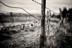 Manky Old Fence (w.mekwi photography) Tags: blackandwhite dof bokeh vignette niftyfifty nikond800 fencefriday wmekwiphotography