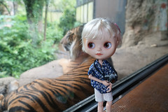 Wainting for the kitty to turn around (omgdolls) Tags: japan blythe blythedoll tippi rbl pureneemobody simplyvanilla dollypunk21