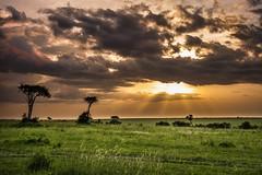 The Mara (Drouyn) Tags: africa sunset sky cloud tree kenya sony masi safari mara savannah plains rx100