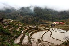 Sa Pa 9 (gsamie) Tags: winter mist color rain fog canon rice vietnam sapa hmong paddyfields t3i 600d gsamie guillaumesamie