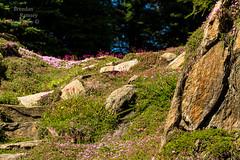 Where gnomes and unicorns live. (Brendinni) Tags: trees outcrop gardens washington rocks steppingstones wildflowers wenatchee ohmegardens