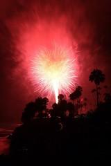 Palm tree like fireworks on 4th Juli Laguna beach (Carsten Waahlin) Tags: fireworks 4th palmtrees juli lagunabeach unedited heislerpark bloodyred