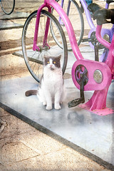 Personal trainer ... (Solo Gala) Tags: cat animal flickr streetgum remely cute clever shot