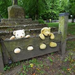 The bears are in the stocks! (Martellotower) Tags: boris marmaduke teddy bears stocks sad