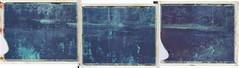 Bog spirit (Maija Karisma) Tags: nature polaroid triptych instant pola expiredfilm 669 peelapart polaroid100landcamera littlebitbetterscan