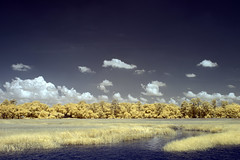 Wilmington River in IR (budrowilson) Tags: lifepixel infrared supercolorir eos7d ef24105mmf4lisusm wilmingtonriver
