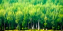 ATAUN-Lareo-03 (ikimilikili-klik) Tags: wood lake reflection lac bosque reflejo foret euskalherria basquecountry embalse gipuzkoa basoa lareo ataun urtegia nikkor28200mm d700 28200mmf3556d nikond700