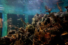 John Pennekamp Coral Reef State Park (dixiestitch19) Tags: tourism florida tourist floridakeys keylargo coralreef johnpennekamp