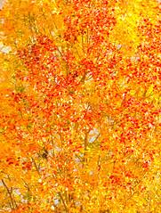 Autumn landscape 6104 by Olli Lamminsalo (www.finnature.com) Tags: syksy ruska monivalotus syyskuu2013
