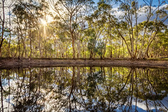 Reflections (*ScottyO*) Tags: blue trees winter sky sun lake reflection tree green nature water leaves sunshine yellow clouds landscape mirror leaf sticks pond glow afternoon outdoor dam branches bank australia foliage eucalypt adelaide glowing sa twigs southaustralia hdr exposureblending parawirra