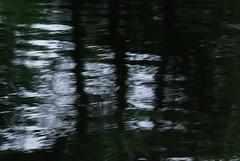 DSC_0078 (rlnv) Tags: animal newjersey turtle princeton delawareandraritancanalstatepark 300mmf45ai nikond40x newjerseystateparks
