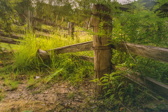 Ramshackle (jenni 101) Tags: australia fence fencefriday hff hinterland northernnsw grass nikond7200 rural scenic wire