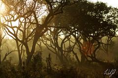Mbuluzi Game Reserve- Swaziland (wsweet321) Tags: africa bird nature southafrica mammal birding safari research endangered swaziland krugernationalpark kruger satara savanna bigfive skukuza knp lowersabie