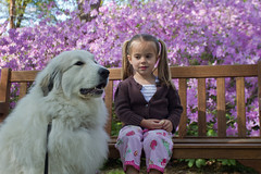 Molly and Chloe (POOLEworks | roger) Tags: dog greatpyrenees chlo grandchild4 ldlportraits