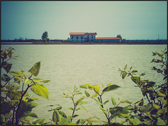 Risaia (beppeverge) Tags: ricefields riso risaia risaie fav10 vercellese beppeverge