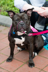 Hm (Knight725) Tags: dog pennslanding d800 2470f28 adoptionevent