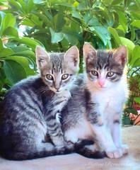 Tina e Tony