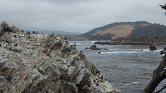Whaler's Cove cormorants (rhyang) Tags: hiking centralcaliforniacoast pointlobosstatereserve