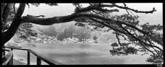 Laguna Blanca y Negra (Baskerville79) Tags: trees blackandwhite bw espaa white black tree blancoynegro water canon eos reflex madera agua arboles bn rbol laguna pino soria niebla lagunanegra castilla urbin castillaylen 600d vinuesa