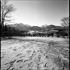 Footprints  (HASSELBLAD SWC) (potopoto53age) Tags: winter blackandwhite bw 6x6 film monochrome japan zeiss photoshop mediumformat square landscape blackwhite footprints ilfordhp5 adobe squareformat 日本 epson hp5 extended ilford footprint yamanashi winterlandscape yatsugatake hassel carlzeiss biogon 八ヶ岳 足跡 appleaperture oizumi ranches 山梨県 hasselbladswc 大泉 cs5 北杜市 makibapark hasselbladsuperwidec hokutoshi まきば公園 epsongtx970 gtx970 potopoto53age carlzeissbiogon38mmf45 adobephotoshopcs5extended makibakouen