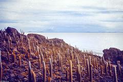 Incahuasi Island (JF Sebastian) Tags: cactus mountain rock landscape island bolivia scannedslide uyuni saltflat rutaquetzal incahuasi digitalized morethan100visits morethan250visits rutaquetzal1996 oldfilmautomaticcamera