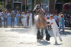 trekpaardkeuring ijzendijke 21072013 3775 (jo_koneko_san) Tags: horses horse holland netherlands cheval nederland zeeland chevaux paard hollande zeeuwsvlaanderen 2013 ijzendijke parden trekpaard zeeuwstrekpaard trekparden