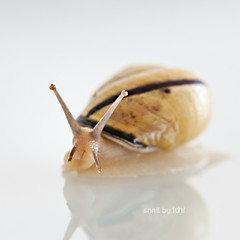 snail (idni . idniama) Tags: detalle detail macro animal nikon snail caracol gettyimages cargol 4up 2013 idni gettyimagesiberiaq3 lente4up