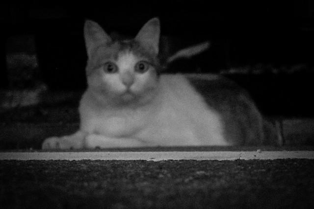 Today's Cat@2013-09-15