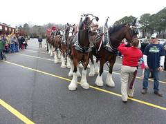 Bud Clydesdales at Oceana NAS NEX (JC VaBeach) Tags: horse wagon virginia team dalmation budweiser busch clydesdale nex anheiser oceananas